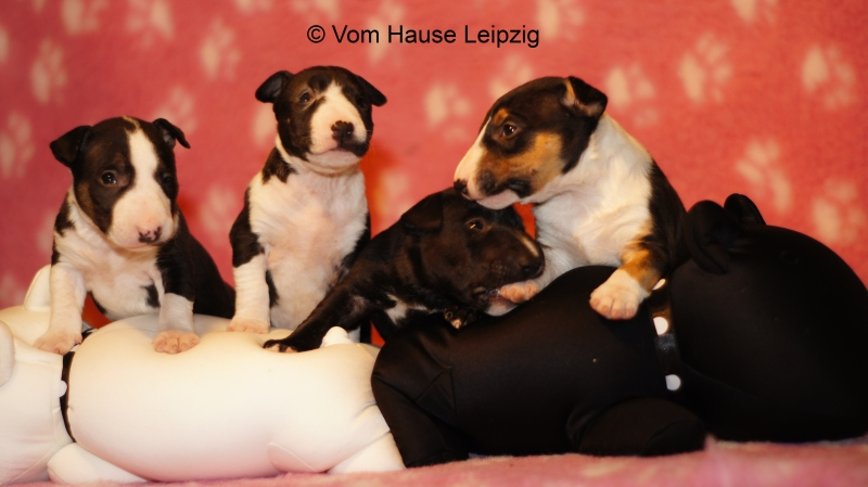 Hetja-Mama mit Bully-Babies