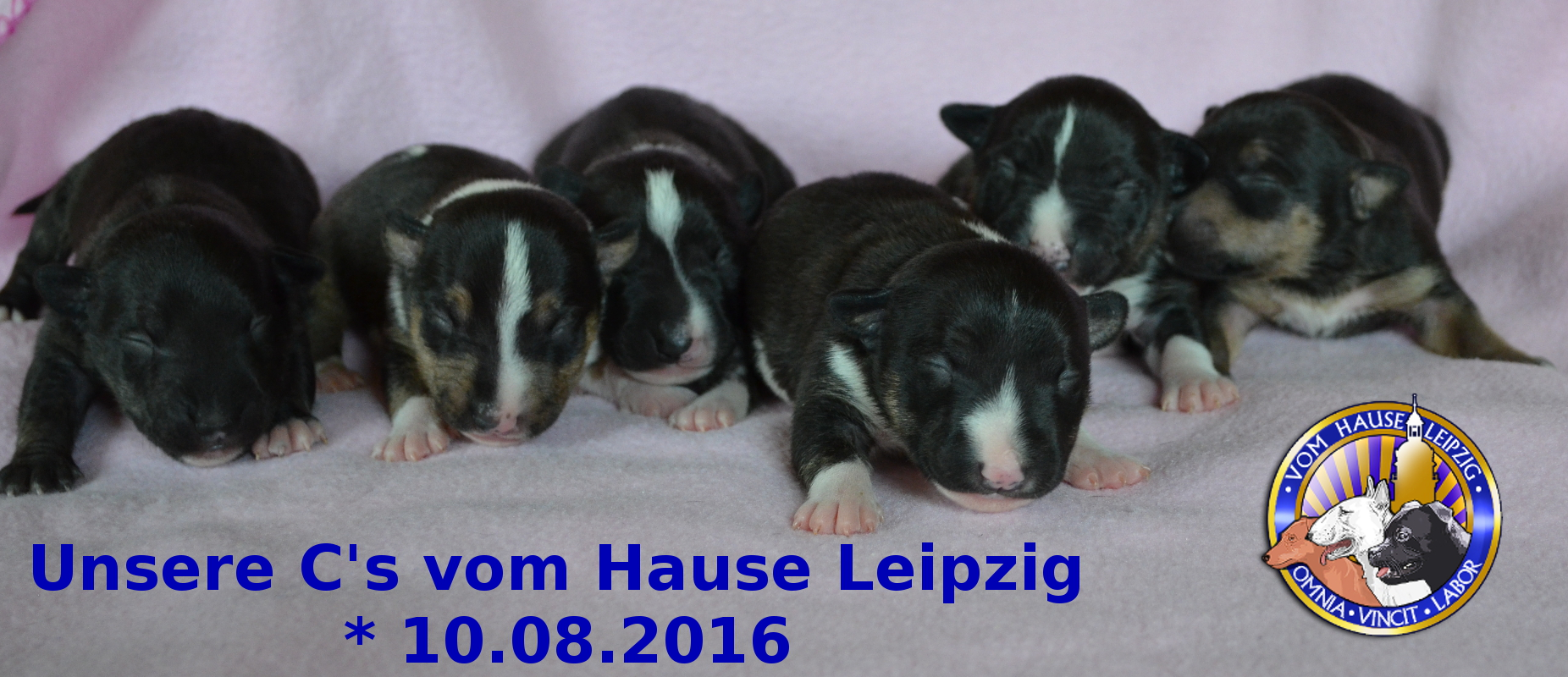 Unsere Babies